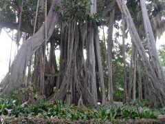 Baum als Netzwerk